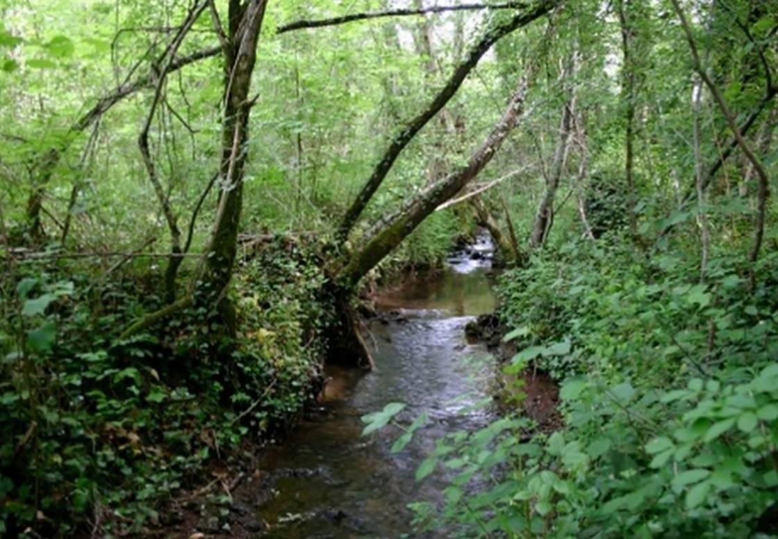 Le ruisseau Des Vergnes